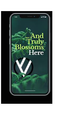 Phone mockup for Washington D.C. Web Design Firm page